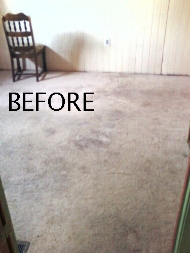 We clean Carpets in Homes